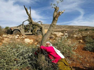 "Since 1967 Israel has destroyed 800,000 olive trees in Occupied Palestine in a 'scorched earth' policy to drive Palestinian farmers from their land. But the Tent of Nations farm near Bethlehem, which has lost 1,500 trees to army bulldozers, insists: ""We will not be enemies ... Our response to this injustice will never be with violence, and we will never give up and leave."" http://bit.ly/1ni5KTC"